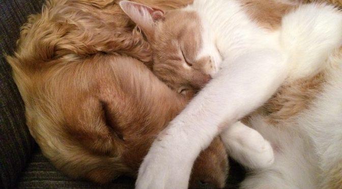 Mit Hund oder Katze nach Thailand